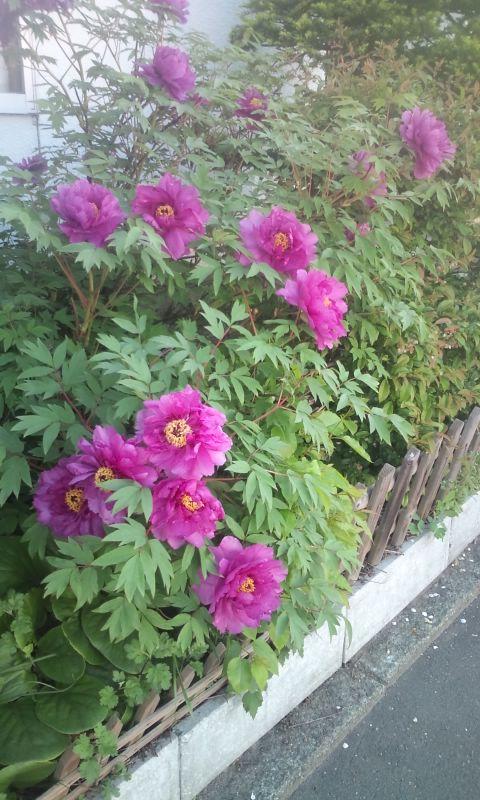 身近なところに咲いていた花